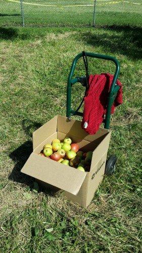 2015-Apple Orchard Photo
