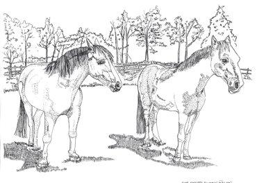 Horses---Commissioned-Art-Illustration