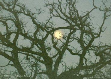 Oak-Tree-and-Full-Moon-